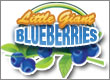 Blueberry Giant - As Seen On TV