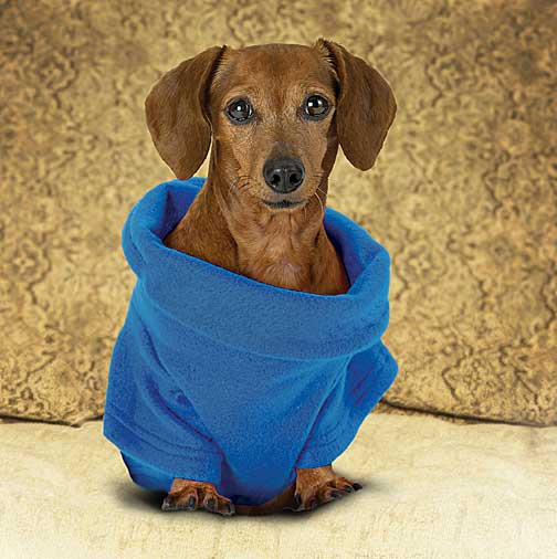 Snuggies for Dog